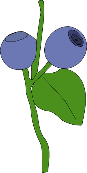 blueberry31488_640.png [300x593]