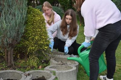 Klub wolontariatu - sadzenie żonkili