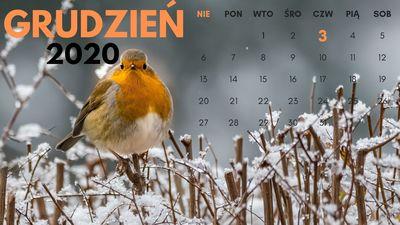 312_kalendarzjpg [400x225]